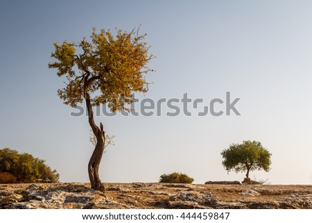 Rural landscape around ruins of the temples in the ancient city of Agrigento, Sicily, Italy - stock photo