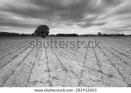 Rural landscape black and white - stock photo