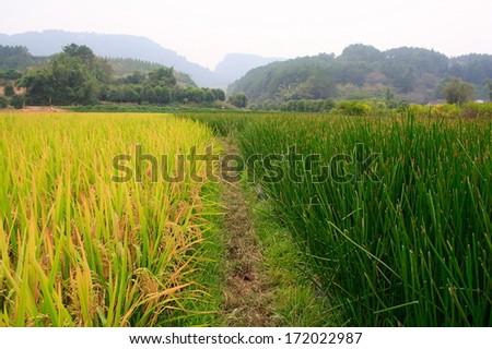 Rural Landscape of Yangshuo. Guangxi. China. - stock photo