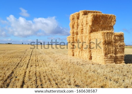Rural landscape showing wheat haystack in field, Darling Downs, rural Queensland Australia.  Rich black soil combined with hot dry climate is ideal for producing wheat grain crops in this region.   - stock photo