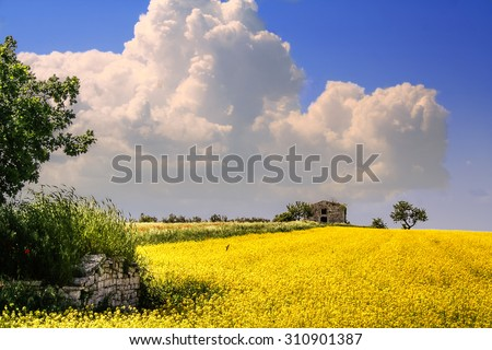 RURAL LANDSCAPE SPRING. Field of yellow flowers..ITALY(Apulia) - stock photo