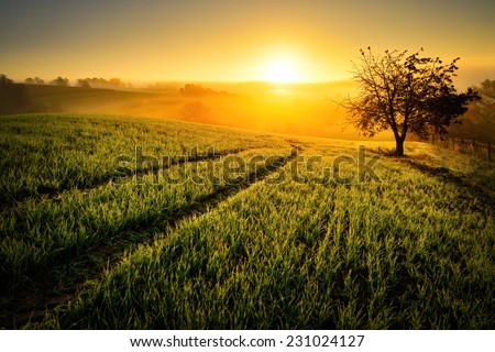 Rural landscape with a hill and a single tree at sunrise with warm light, trails in the meadow leading to the golden sun - stock photo