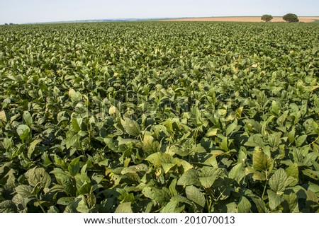 Rural landscape with fresh green soy field. Soybean field, in Tocantins, Brazil. - stock photo