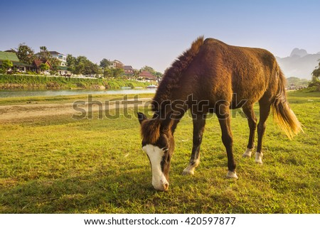 Rural landscape with grazing horse on pasture at sunset.  - stock photo