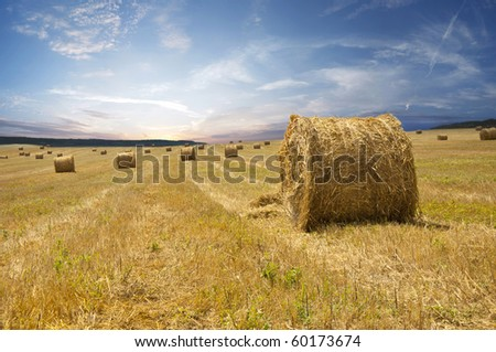 Rural landscape with tractor road in wheat field - stock photo