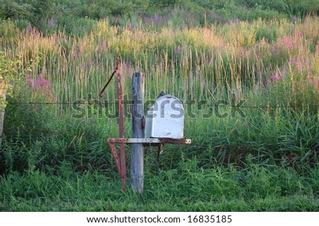 rural mailbox with wildflowers - stock photo