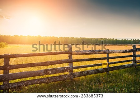 Rural nature at sunset. Beautiful summer landscape with field and forest - stock photo
