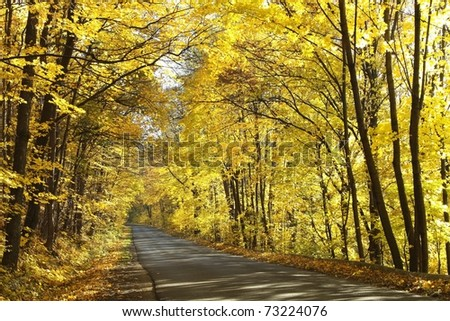 Rural path in autumn woods among the yellow leaves of maple trees. - stock photo