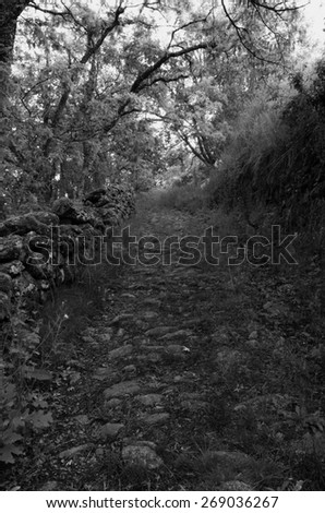 Rural path made with stones. Footpath route - stock photo