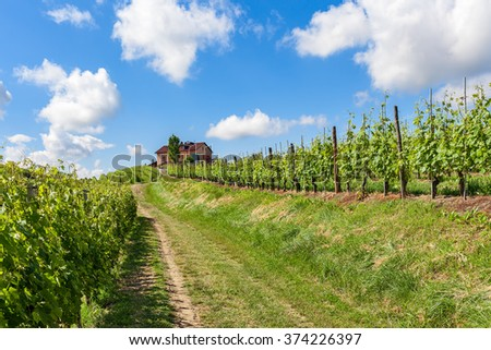 Rural road among green vineyards towards house on the hill under blue sky with white clouds in Piedmont, Northern Italy. - stock photo