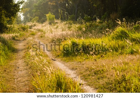 Rural road ant the other plants in the evening - stock photo