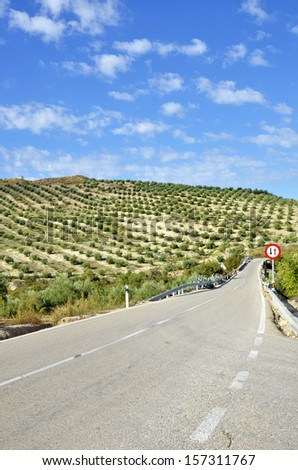 Rural road between olive trees in andalucia  - stock photo