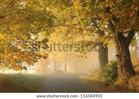 Rural road in a misty autumn morning. - stock photo