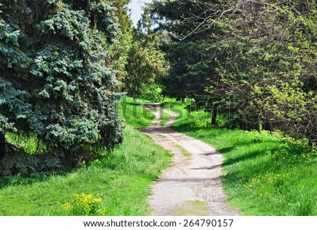 Rural road in coniferous forest, sunny spring day - stock photo