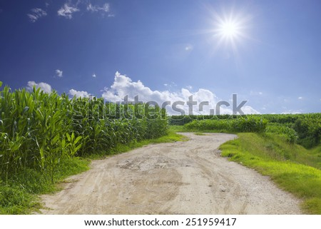 rural road with sky and corn field background - stock photo
