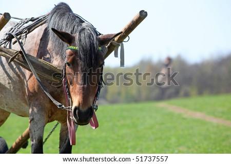 Rural scene - horse, cart, lane and timber church - stock photo