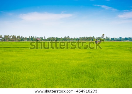 Rural scene of rice field green grass with blue sky cloudy, landscape background - stock photo