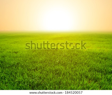 rural scene sunset - stock photo