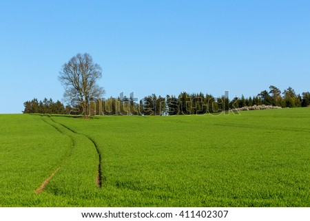 rural spring landscape in czech Republic - region Vysocina, highland. Alone tree in field - stock photo