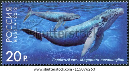 "RUSSIA - CIRCA 2012: A stamp printed in Russia shows Humpback Whale, series ""Fauna of Russia. Whales"", circa 2012 - stock photo"