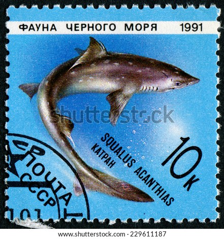 RUSSIA - CIRCA 1991: stamp printed by Russia, shows Marine Life, Squalus acanthias, circa 1991. - stock photo