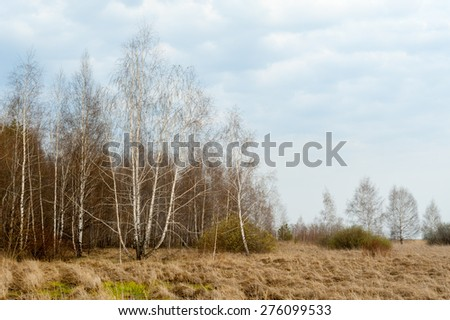 Russia. Spring landscape. Wood, birch, dry grass. - stock photo