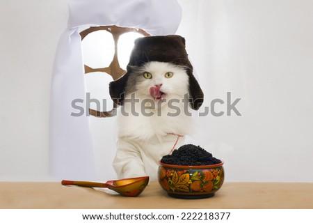 Russian cat eats caviar  - stock photo