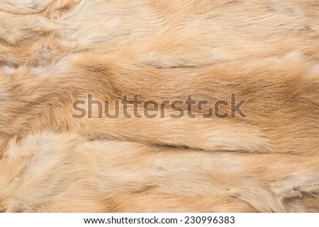 Russian Mink Fur background ginger color skin  - stock photo