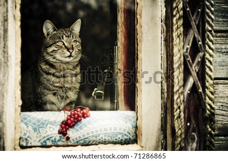 Rustic cat sitting behind a wooden house - stock photo