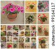 rustic flower pots collage, Italy, Europe - stock photo