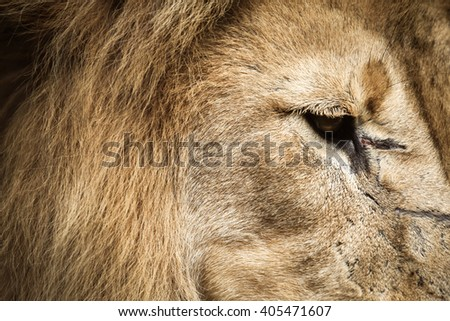Rustic lion looking down - stock photo