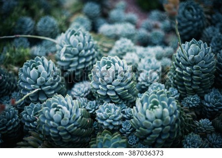 Rustic macro shot of cactus - tropical plant with shallow depth of field.Natural background with succulent. - stock photo