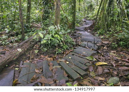 Rustic path running through a tropical rainforest nature reserve in Ecuador - stock photo