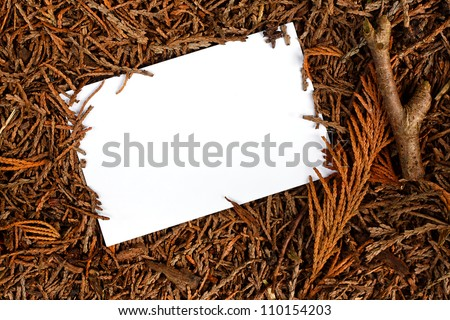 Rustic Pine forest floor frame, good border for landscaping, logging, carpentry, forestry or woodland management. - stock photo