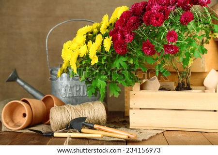 Rustic table with flowers, pots, watering can and plants on sackcloth background. Planting flowers concept - stock photo