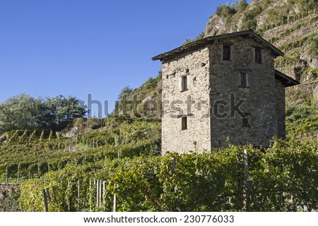 Rustico surrounded by vineyards iln the home of the famous Veltliner - stock photo