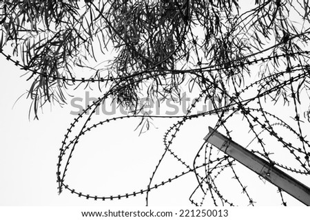 Rusty barbed and a tree. War and imprisonment concepts. Aged photo. Black and white.. - stock photo