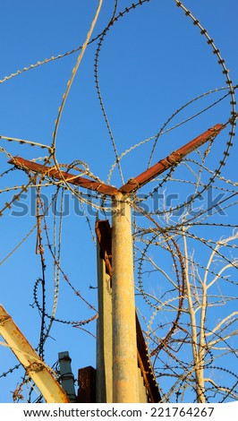 Rusty barbed wire against blue sky. A tree with bare twigs at background. War and imprisonment concepts.  - stock photo