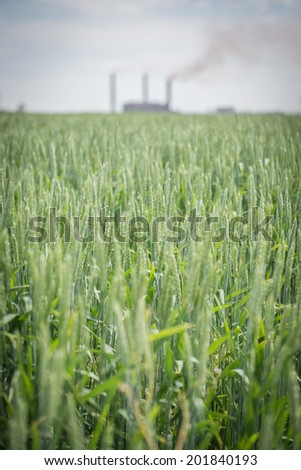 rye field with ironworks on background - stock photo