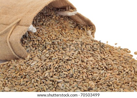 Rye grain spilling out of a hessian sack over white background. - stock photo