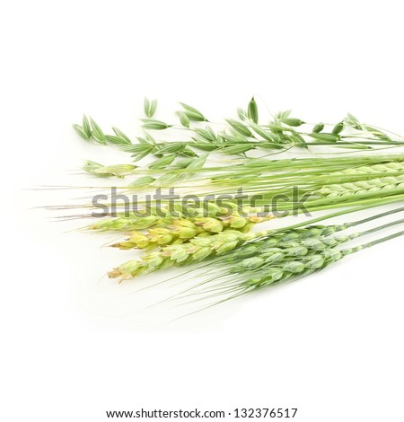 Rye, wheat, oat ears isolated on white - stock photo