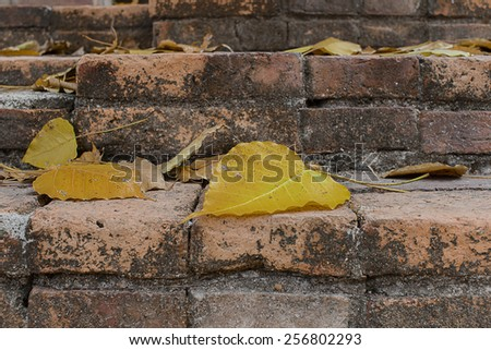 Sacred leaf on brick - stock photo
