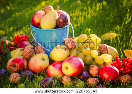 Sad autumn or summer: fruits in the grass in the sunshine - stock photo