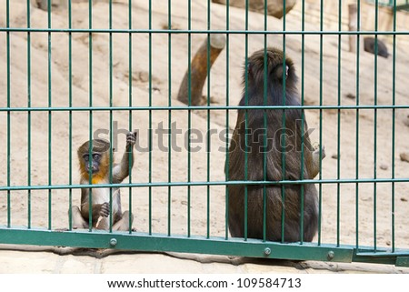 Sad baby monkey - stock photo