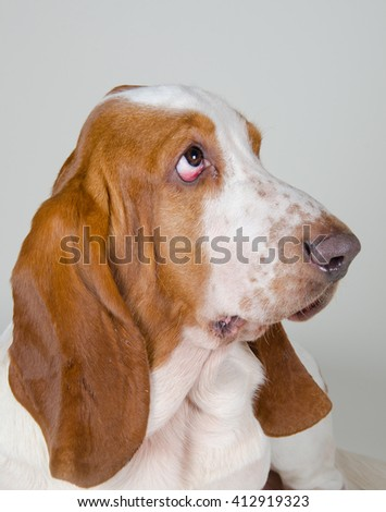 Sad Basset Hound looking up, retro style (selective focus on the eyes) - stock photo