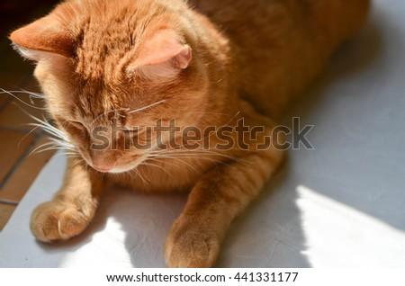 Sad cat lying on the floor - stock photo