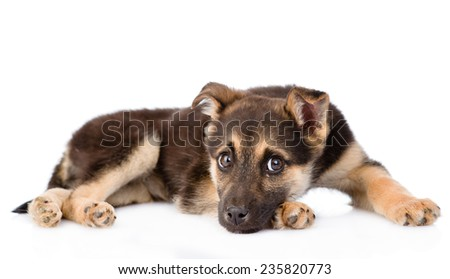 sad crossbreed puppy dog looking at camera. isolated on white background - stock photo