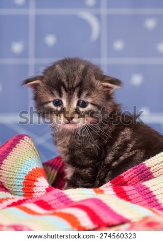 Sad cute kitten in a warm knitted scarf over light blue background - stock photo