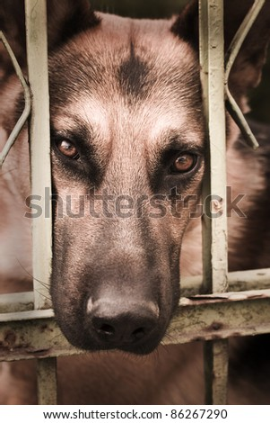 Sad dog behind bars - stock photo