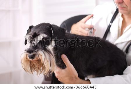 Sad dog having injection at veterinary ambulance - stock photo